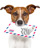 Product picture Dog Training Affiliate Package